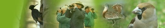 Hungarian Bird Tours